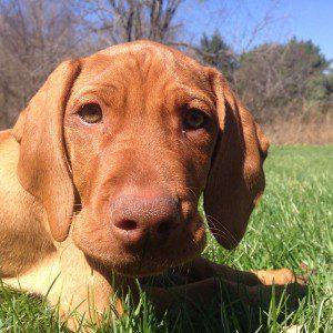 Choosing A Pet Sitter Costs & Rates