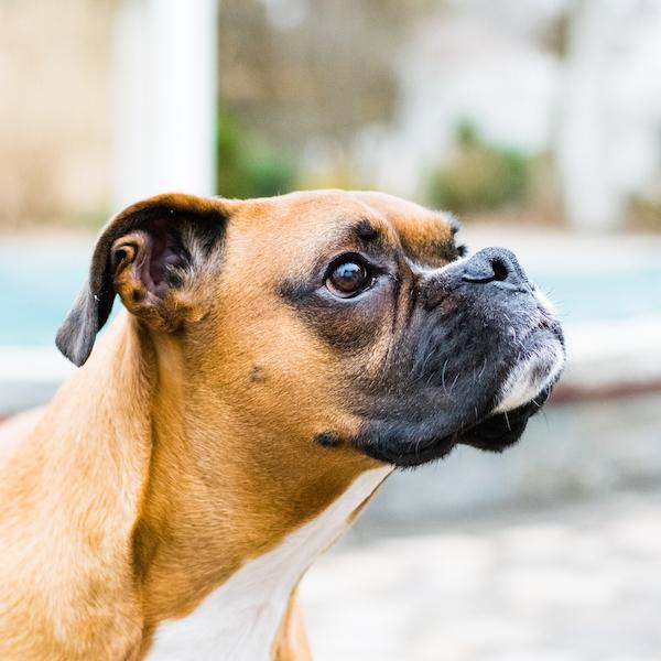 Dog Training Southington Ct