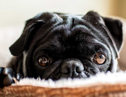 How Much Does A Dog Sitter Cost Per Day