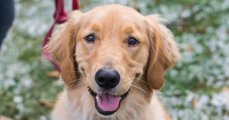 Most Common Pet Names Dog And Cat Names Sarah S Pet