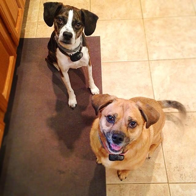Dog Trainer Southington