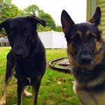 Brutus & Bella