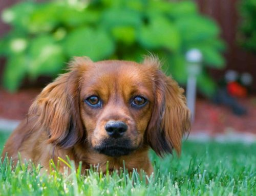 How We Hire the BEST Professional Pet Sitters