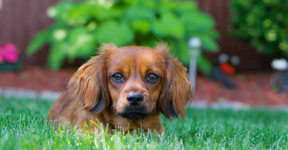 Pet Sitter Caring for Dog