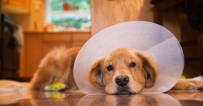 Sick dog at vet