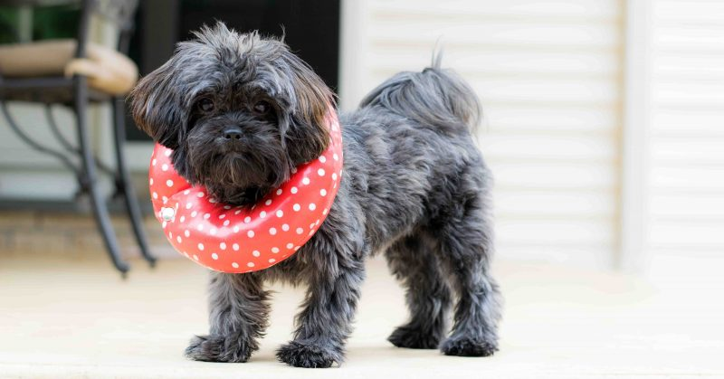 Sick Dog Care Cheshire