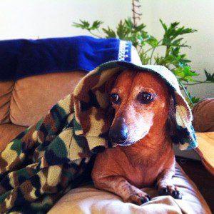 Dog Walker Southington