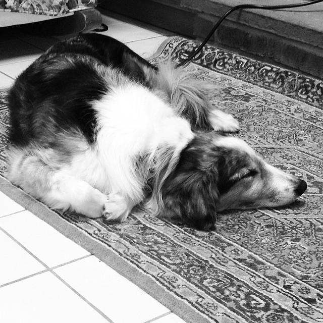 Dog Trainer Cheshire