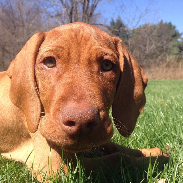 Online Profiles At Sarah S Pet Sitting
