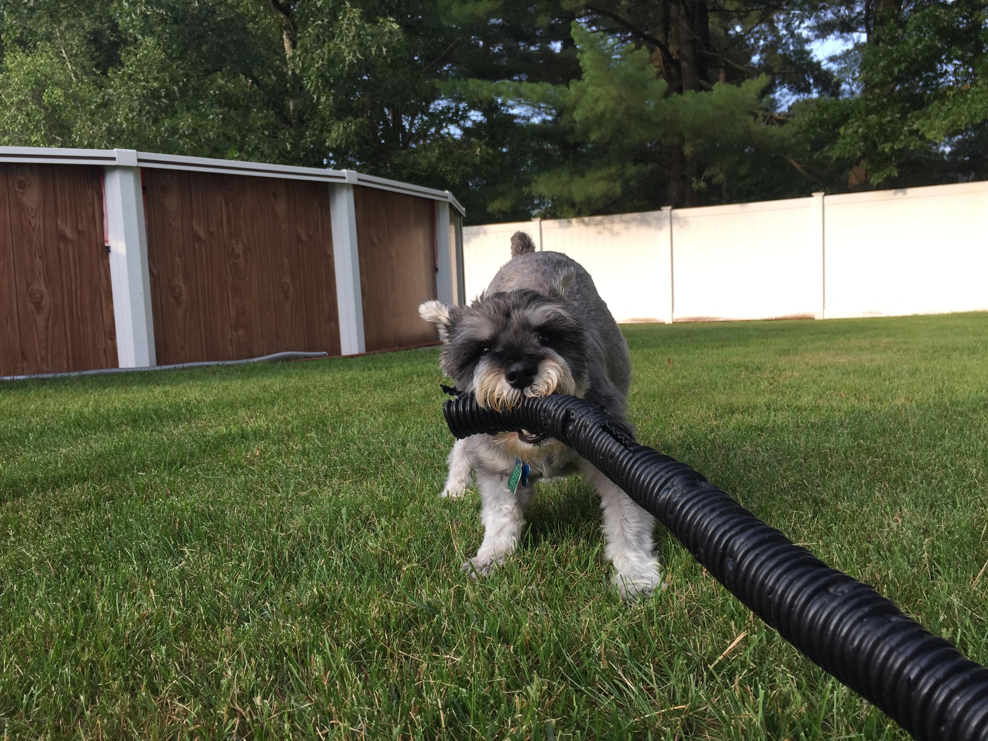 Dog Training Southington