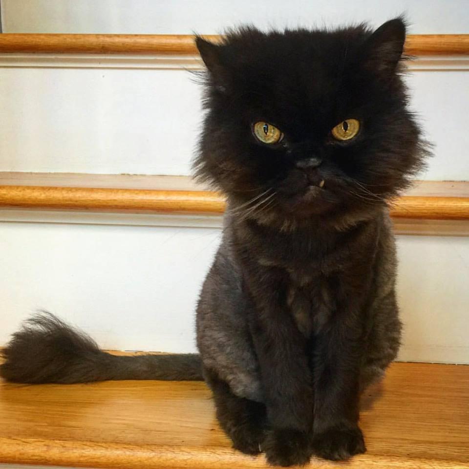 Cat Boarding Cheshire
