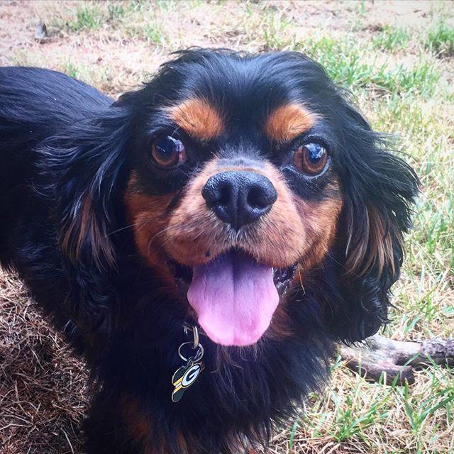 Dog Trainer Wallingford