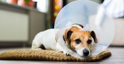 Dog At Vet Pet Insurance Worth The Cost