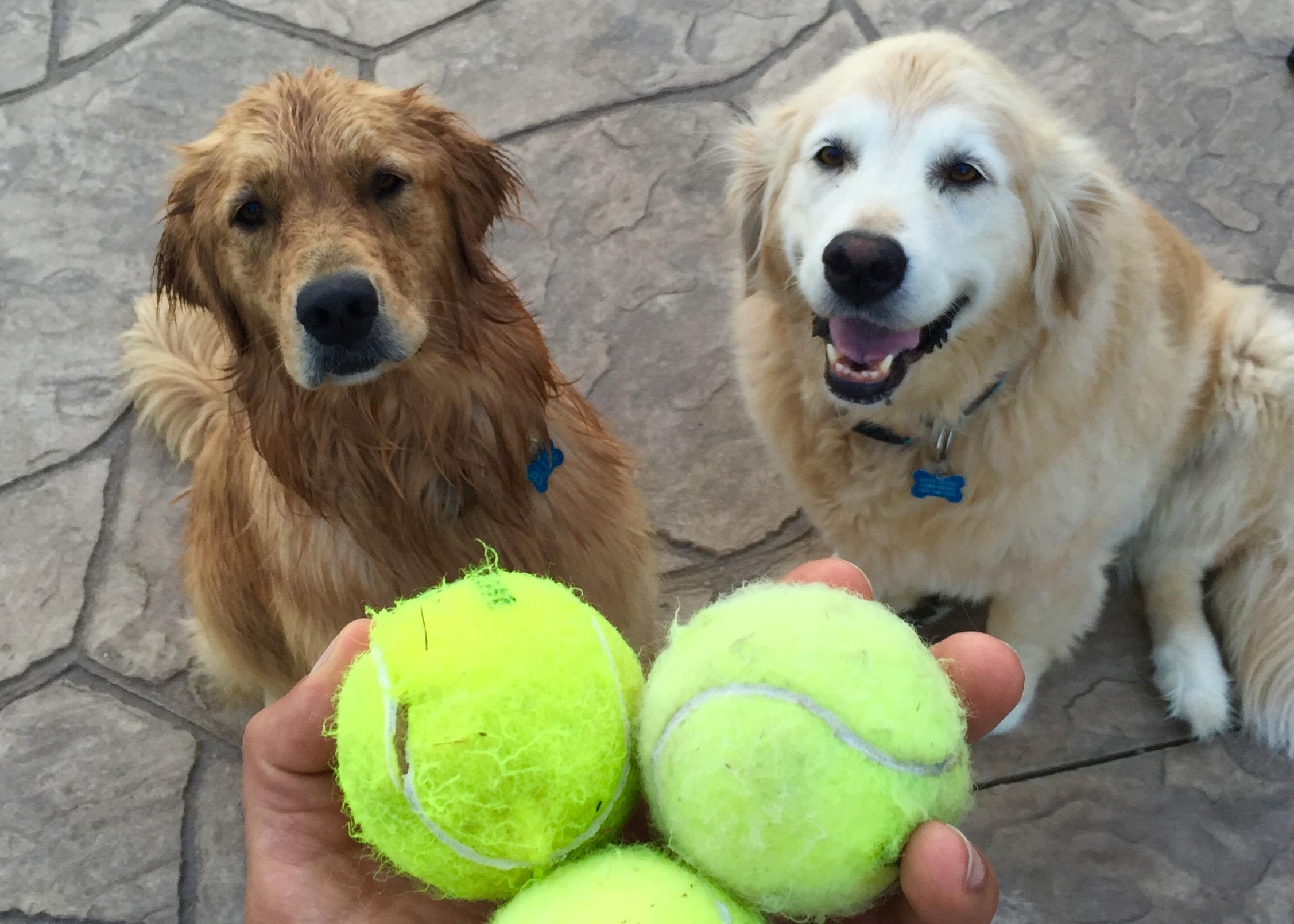 dog training cheshire