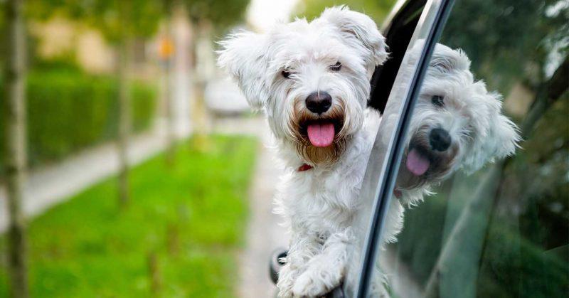 Bristol Dog Training Society