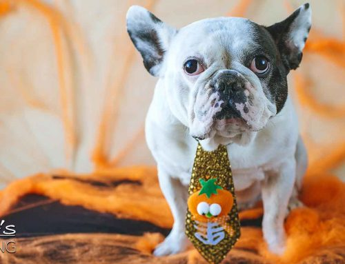Keeping your pets safe this Halloween