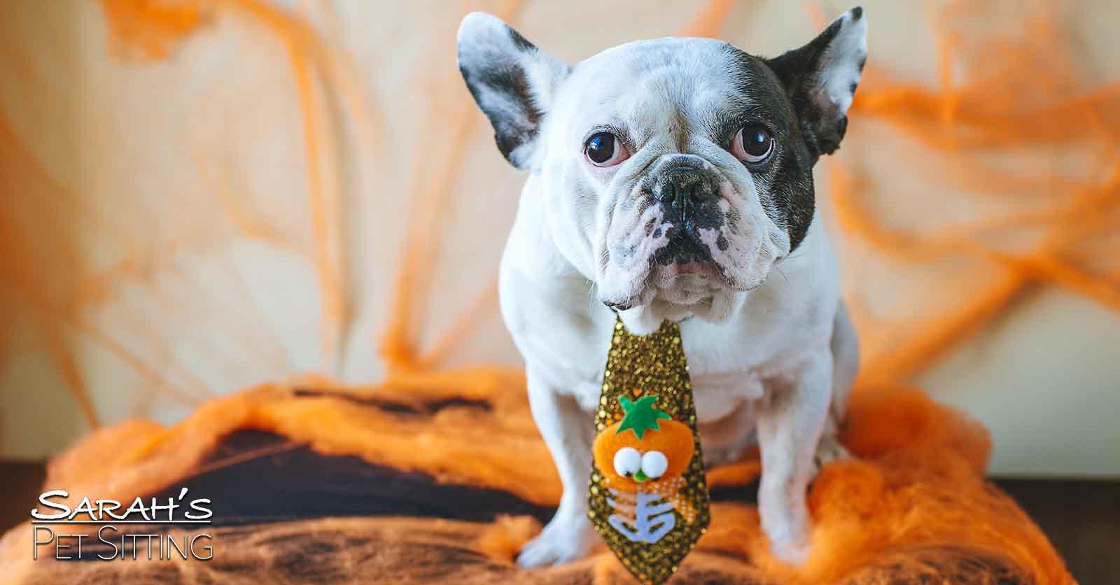 Keeping Your Pets Safe This Halloween Sarah S Pet