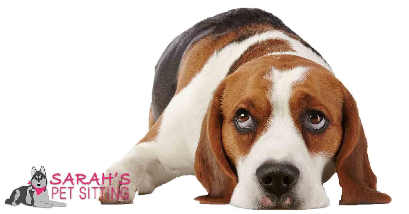 Dogs Eating Poop Called