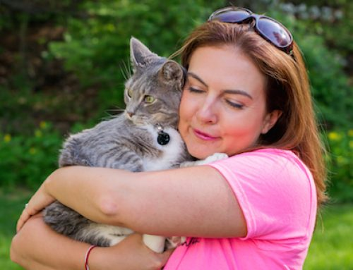 How to Choose the Best Pet Sitter in CT
