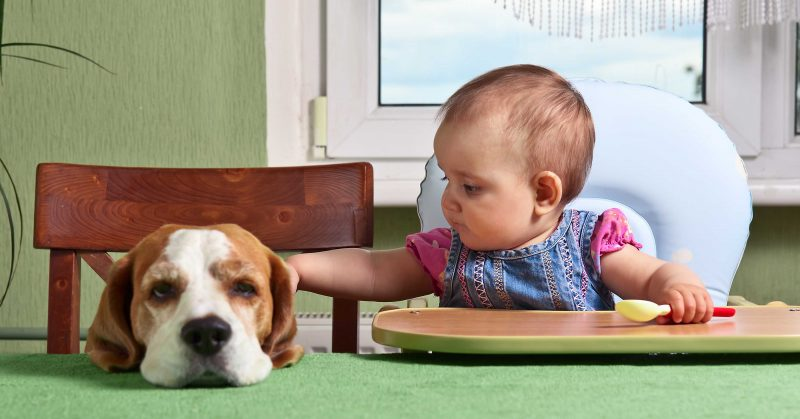 Dog Introduced To New Baby