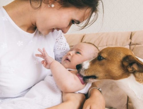 How To Introduce Your Dog To A New Baby
