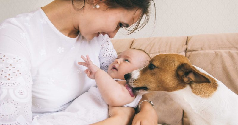 Mother Introducing Dog To Baby