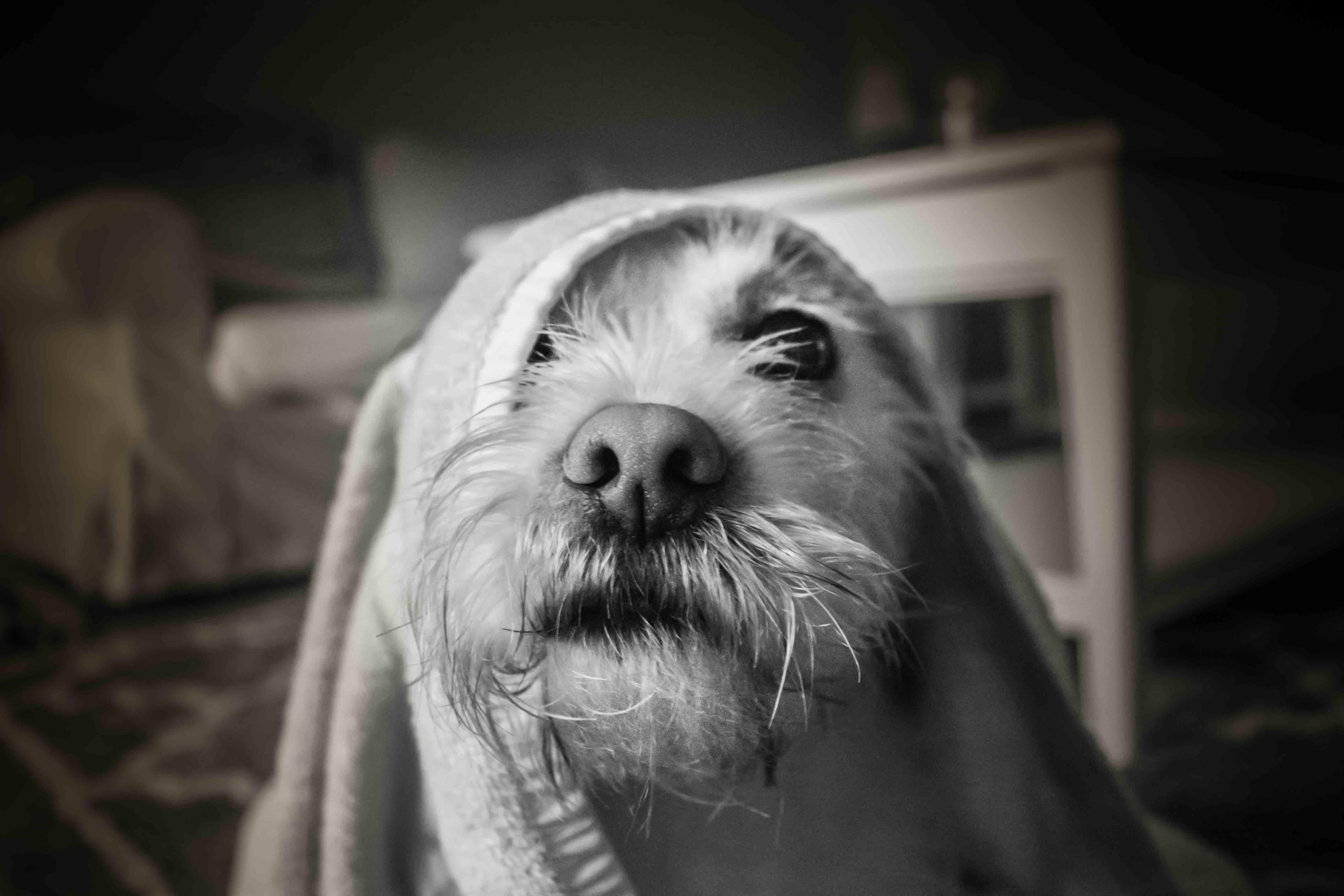 Pet Photography CT