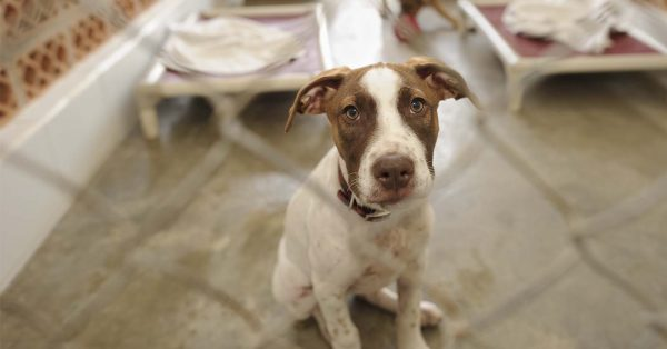Volunteer Animal Shelters Connecticut