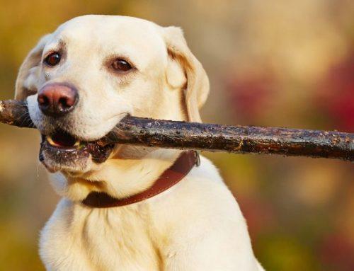 Dog Trainer | Certified Dog Trainer | Behaviorist