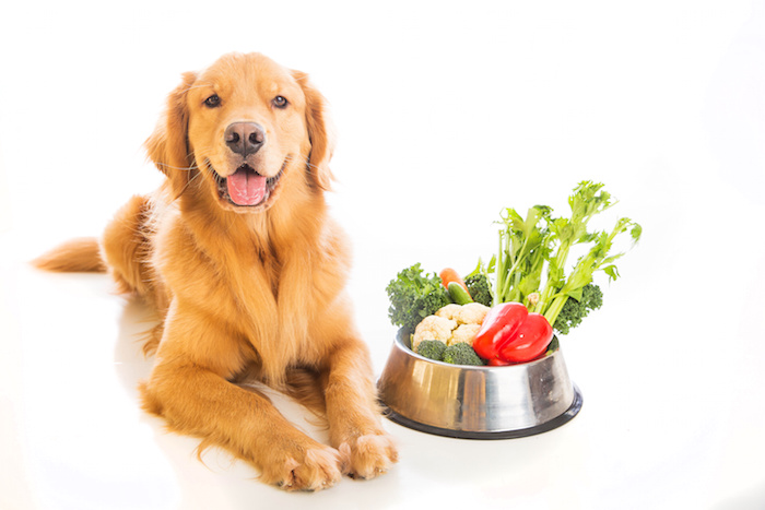 Dry Dog Food and Kibble