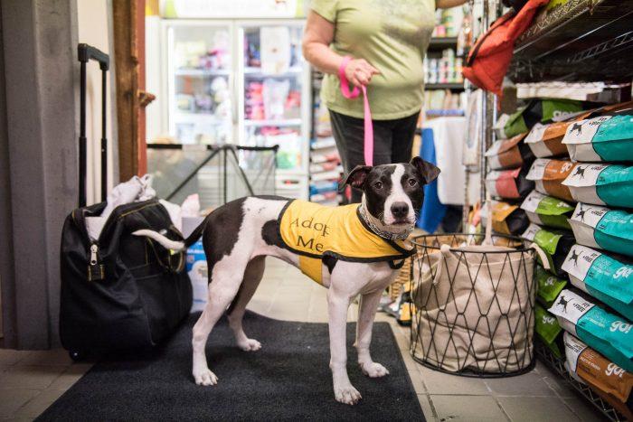 Spotty Dog Rescue At Thomaston Feed Cheshire Sarah S Pet
