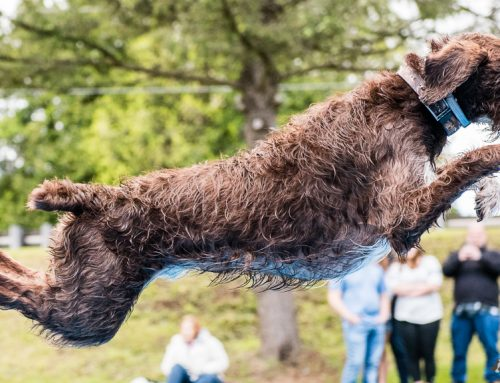 DockDogs Event | Cheshire 2017