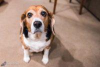 Pet Sitter Dog Walker