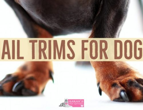 Nail Trims For Dogs
