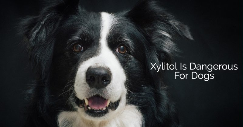 Xylitol Dogs