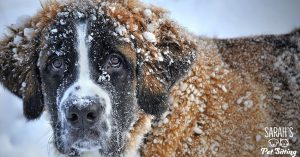 Ice Melt Dogs