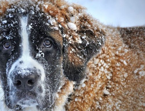 Ice Melt Precautions With Dogs